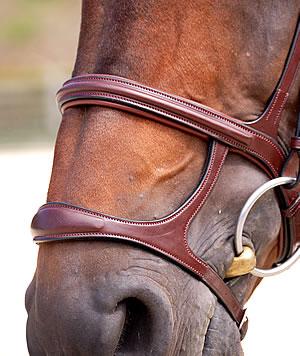 L'équitation sans mors - Page 5 B6117_5